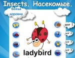 "Learning English words. The topic ""Insects."""